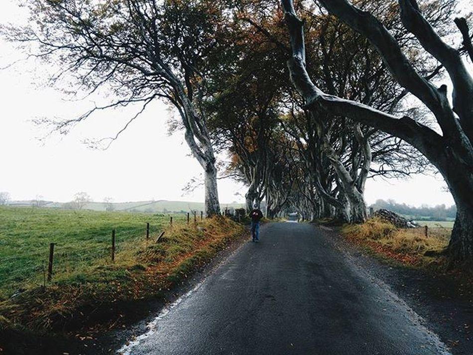 The King's Road (1/2) Gameofthrones Travel Travelgram Ighistory Igtravel Nature Road Landscape DarkHedges Northernireland Ireland Uk Europe Seetheworld  Justgoshoot ExploreEverything Exploretocreate