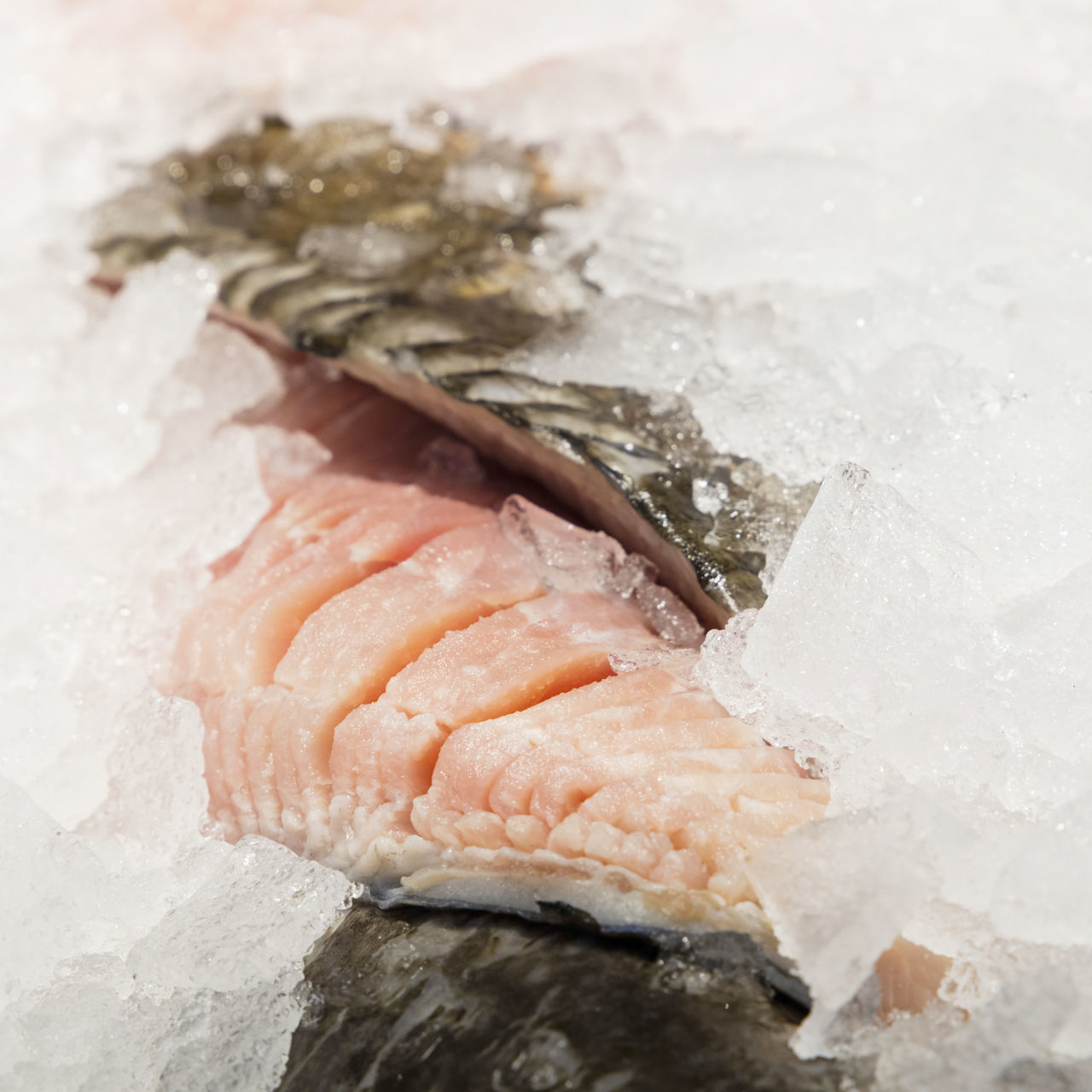 Catch of the day, fresh cod fish fillet on ice in retail store display. close up Catch Of The Day Chopped Close-up COD Codfish Cooking Fillet Fish Fish On Ice Fisherman Food Fresh Ice Ingredient Market Retail  Retail Display Sale Seafood Selection Shelf Sliced Store Supermarket The Shop Around The Corner