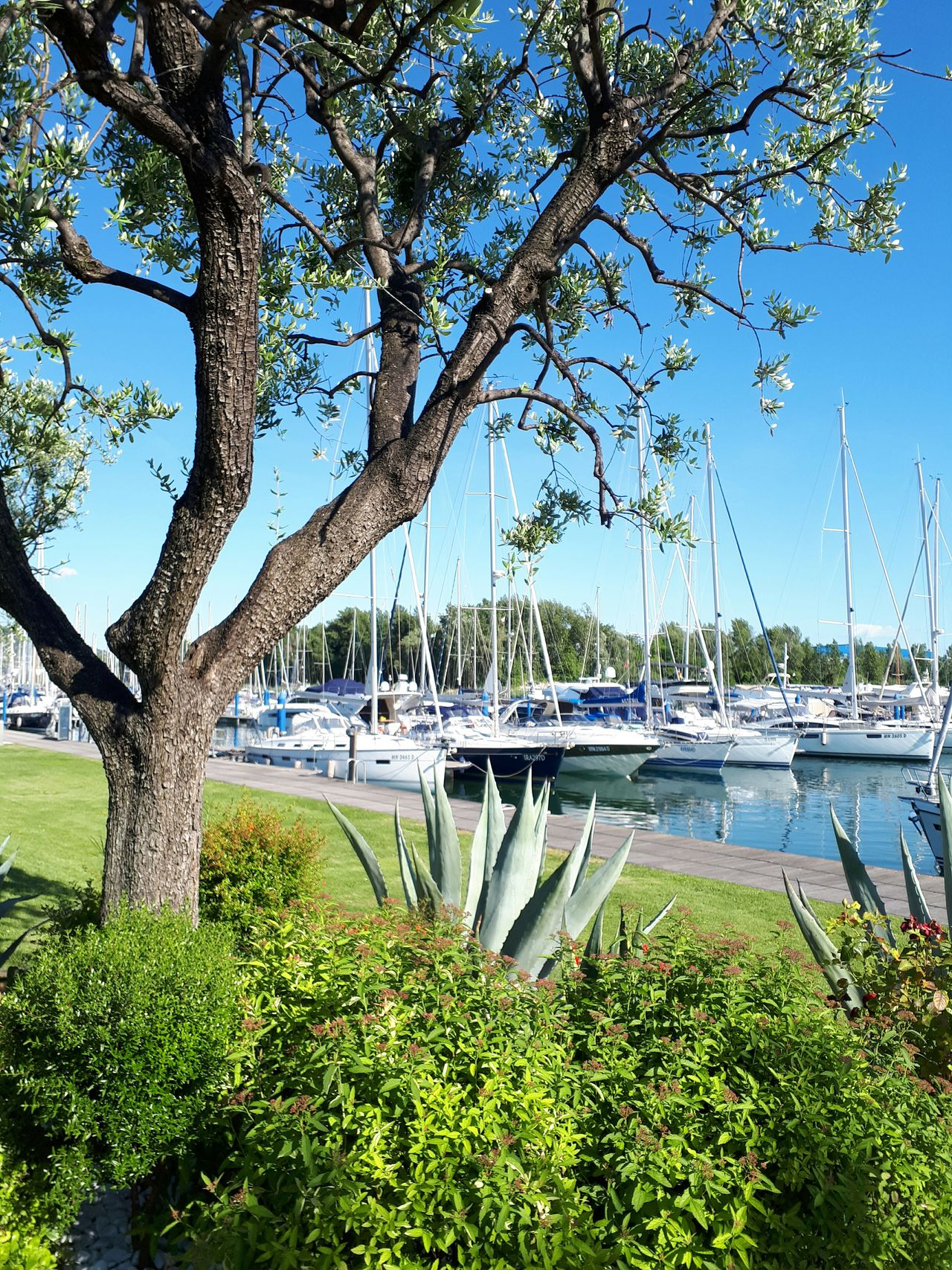 Tree Water Growth Outdoors Nautical Vessel Day Green Color Nature Plant No People Sky Nautic Club Harbor Grass Beauty In Nature Flower