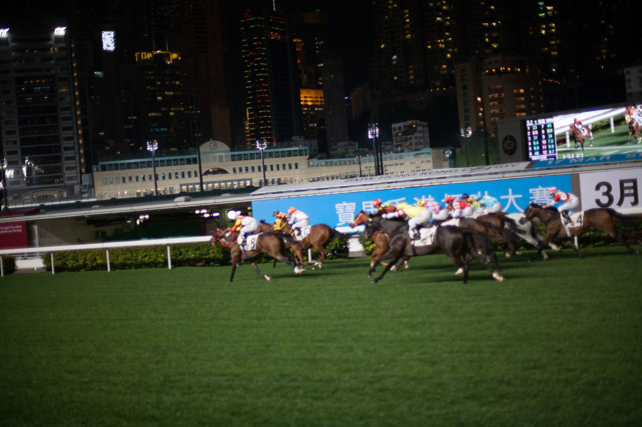 sport, competition, running, domestic animals, real people, grass, animal themes, horse racing, mammal, outdoors, competitive sport, night