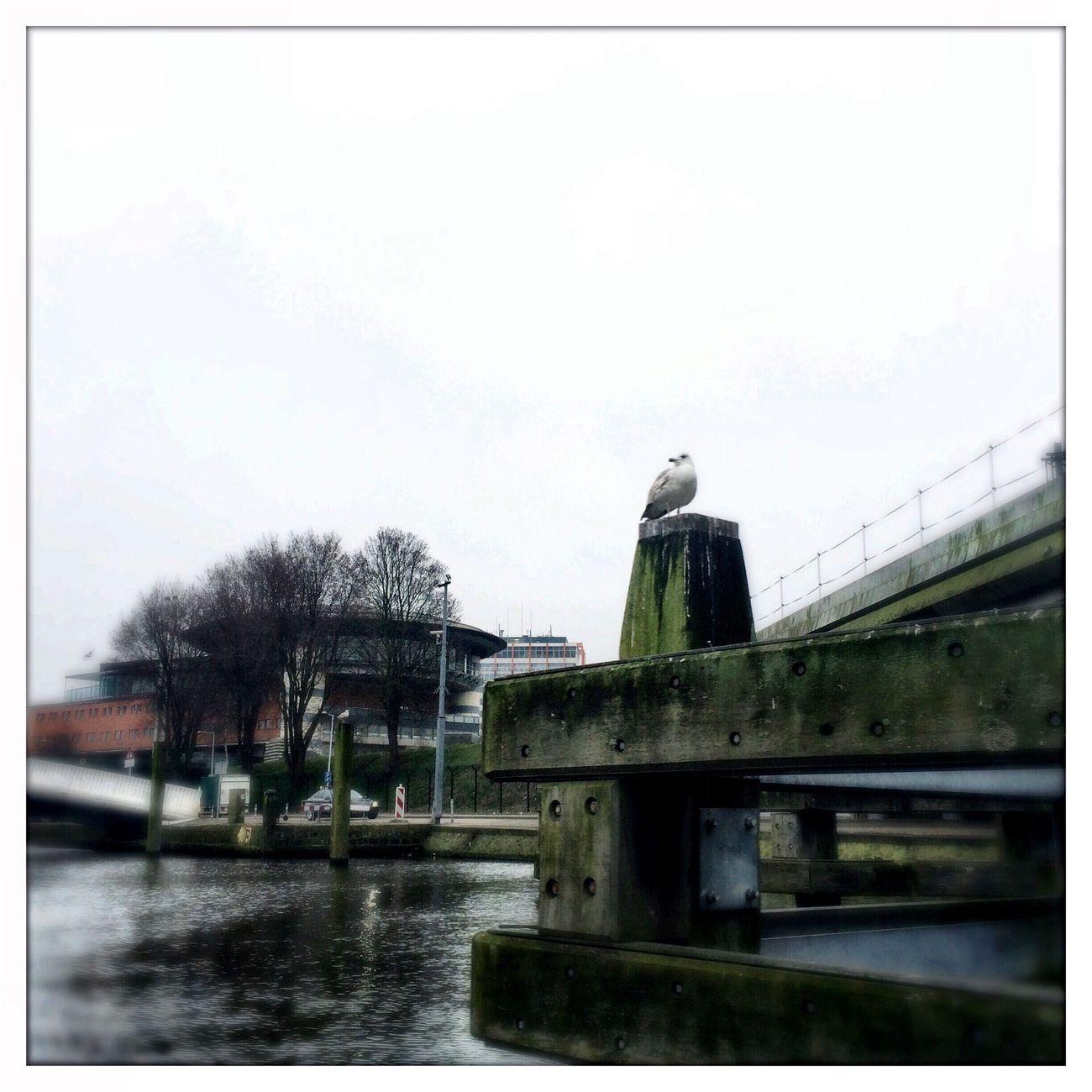 Tadaa Community Hipstamatic Amsterdam Brücke Kanal Urban Geometry Move Bird