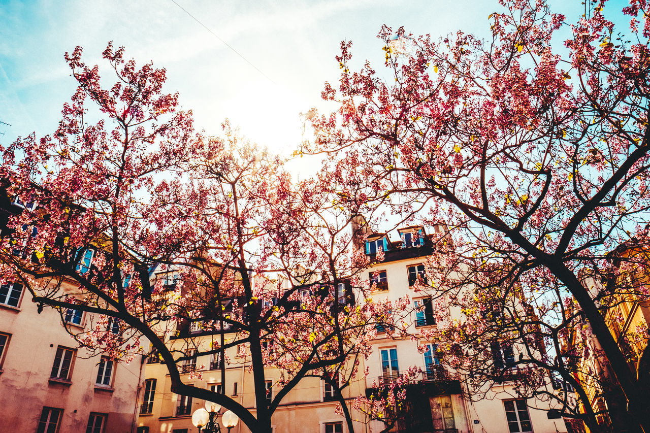 Architecture Beauty In Nature Blue Sky Branch Building Exterior Built Structure City Day Flower Growth Low Angle View Low Angle View Nature No People Old Houses Outdoors Paris Pink Color Pink Leaves Sky Streetlife Sun Through The Trees Sunlight Tree