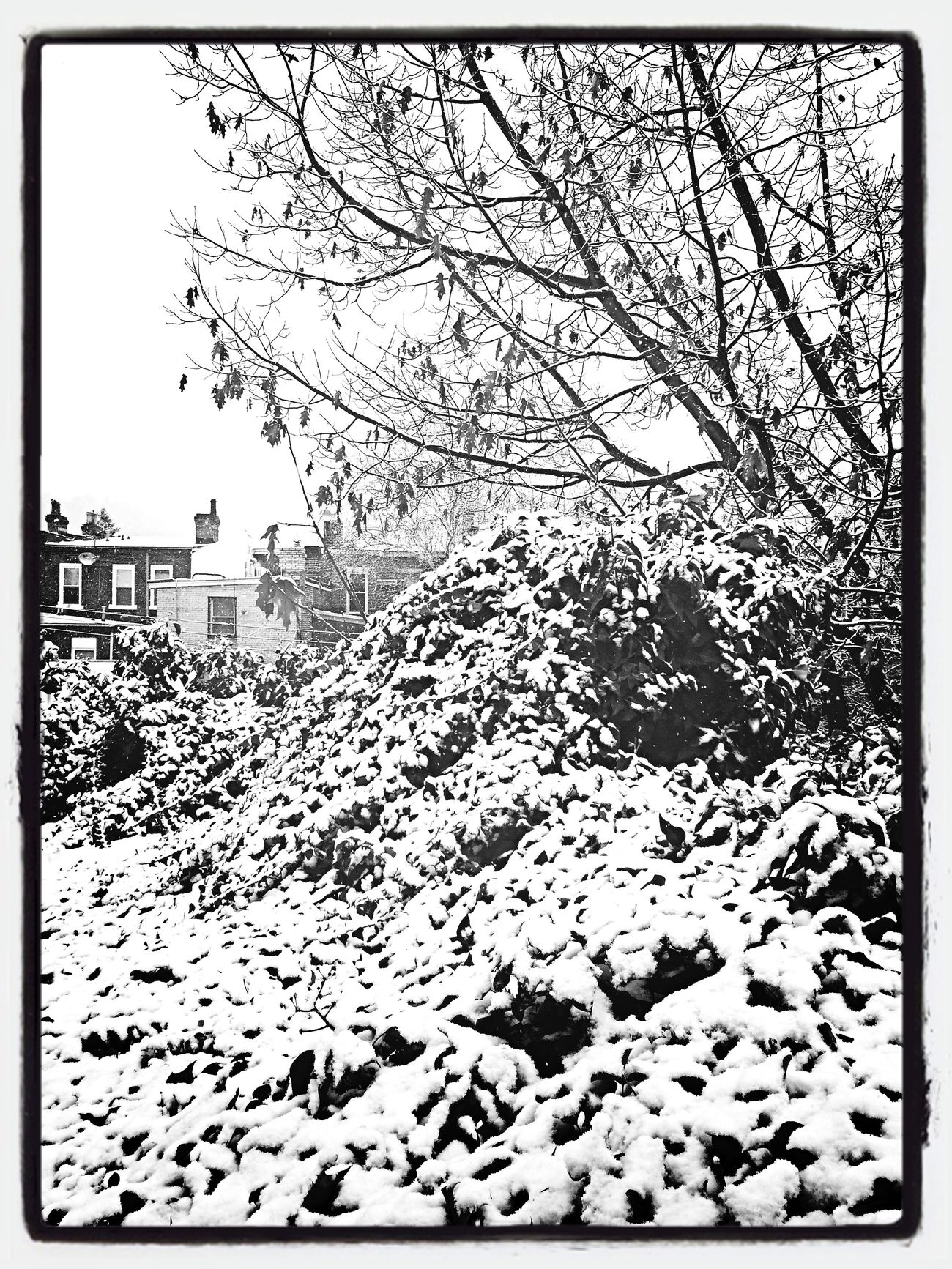 First Snow Monochrome Blackandwhite