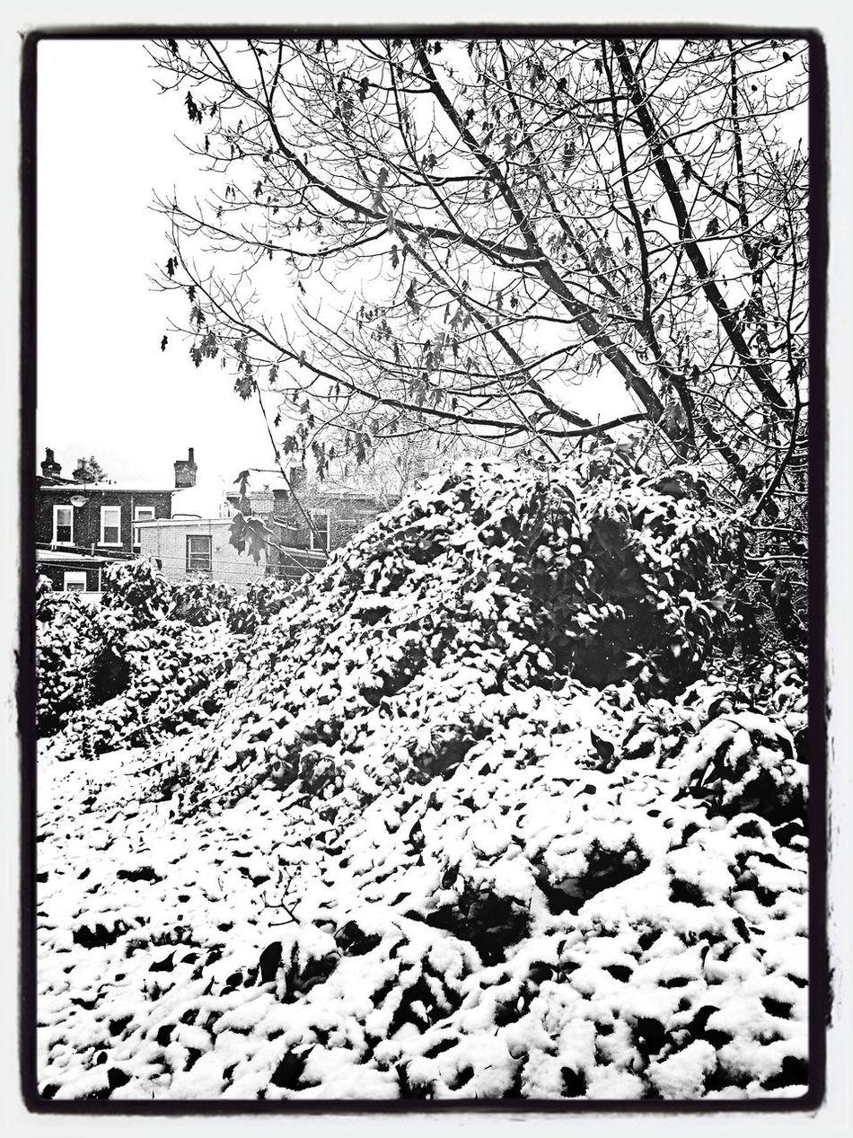 First Snow Monochrome Blackandwhite