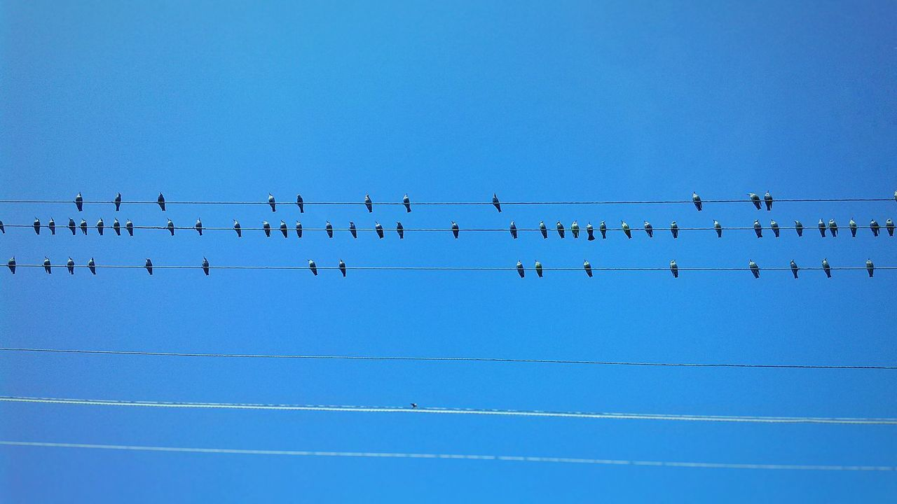 Low Angle View Of Birds Perching On Cables Against Blue Sky