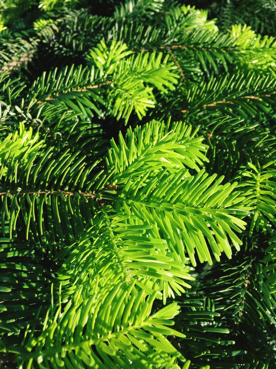 green, leaf, nature, green color, day, fern, growth, foliage, no people, beauty in nature, close-up, outdoors