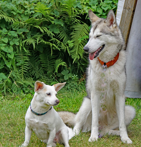Impressionen vom Hundetag Day Dogs Domestic Animals Nature No People Pets Small And Big White Dogs