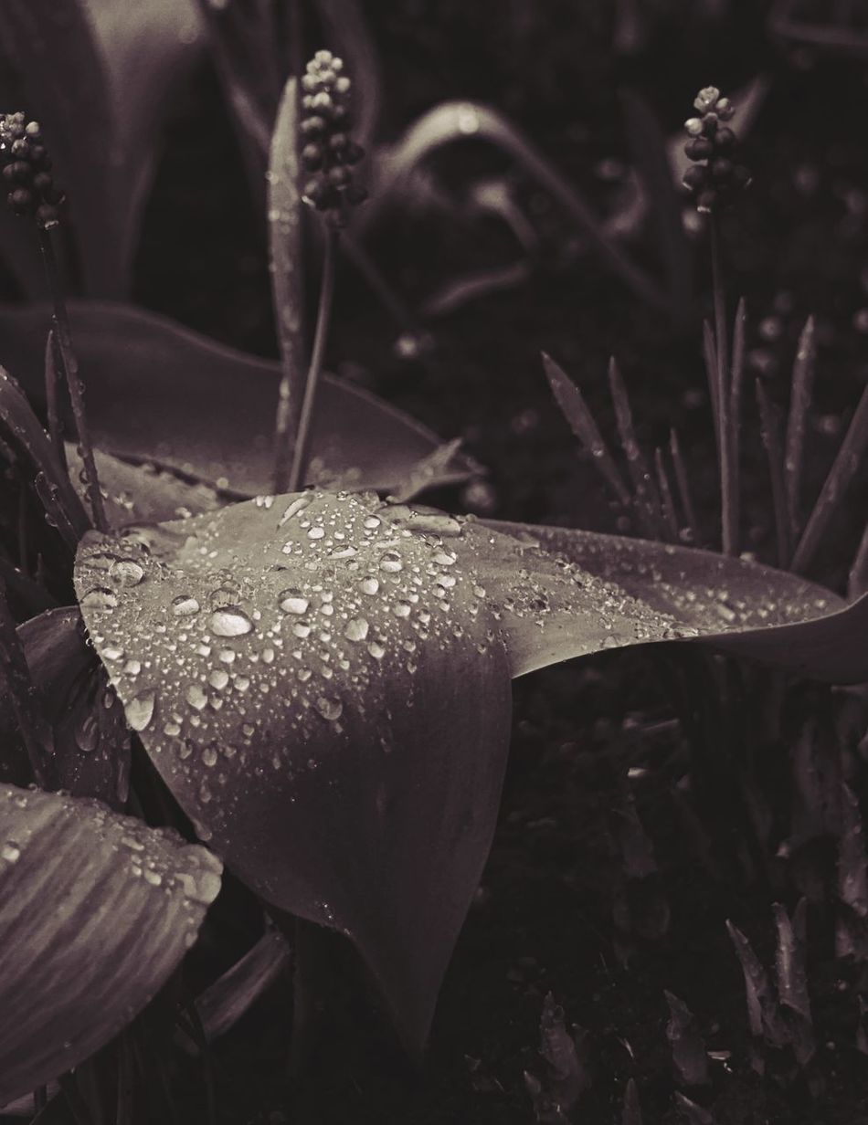 leaf Beauty In Nature Close-up Drop Flower Fragility Freshness Growth Leaf Nature No People Outdoors Plant Sepia Springtime Wet
