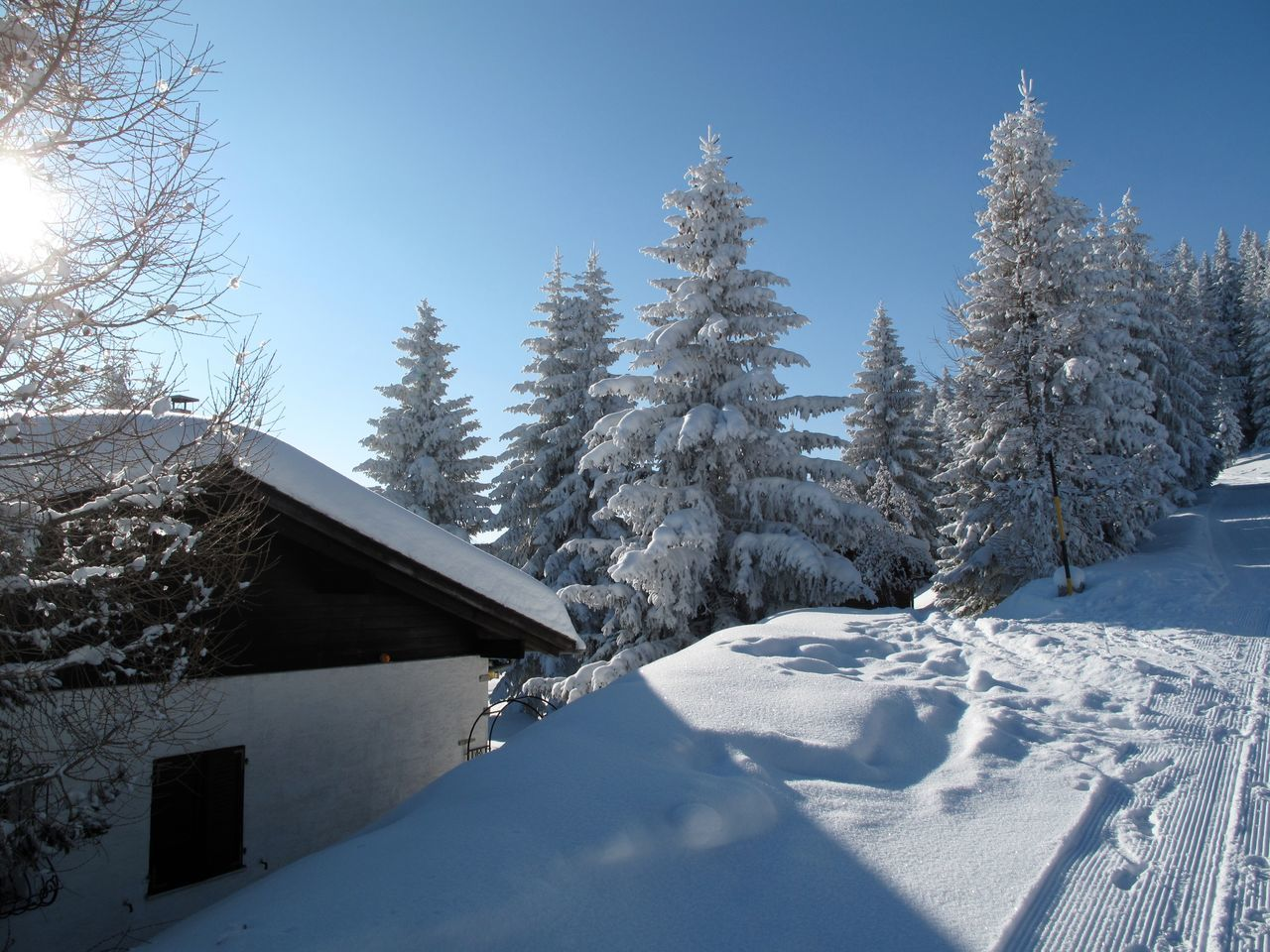 Beauty In Nature Blue Building Exterior Built Structure Chalet Christmas Christmas Tree Cold Temperature Cottage Day Forest House Log Cabin Mountain Nature No People Outdoors Pine Tree Sky Snow Snowing Tree Vacations Winter