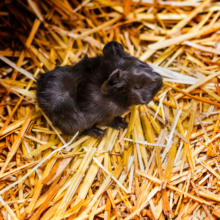 So this is the world! Animal Themes Black Black Color Captivity Close-up Mammal New Life No People One Animal Selective Focus Softness Straw Wildlife