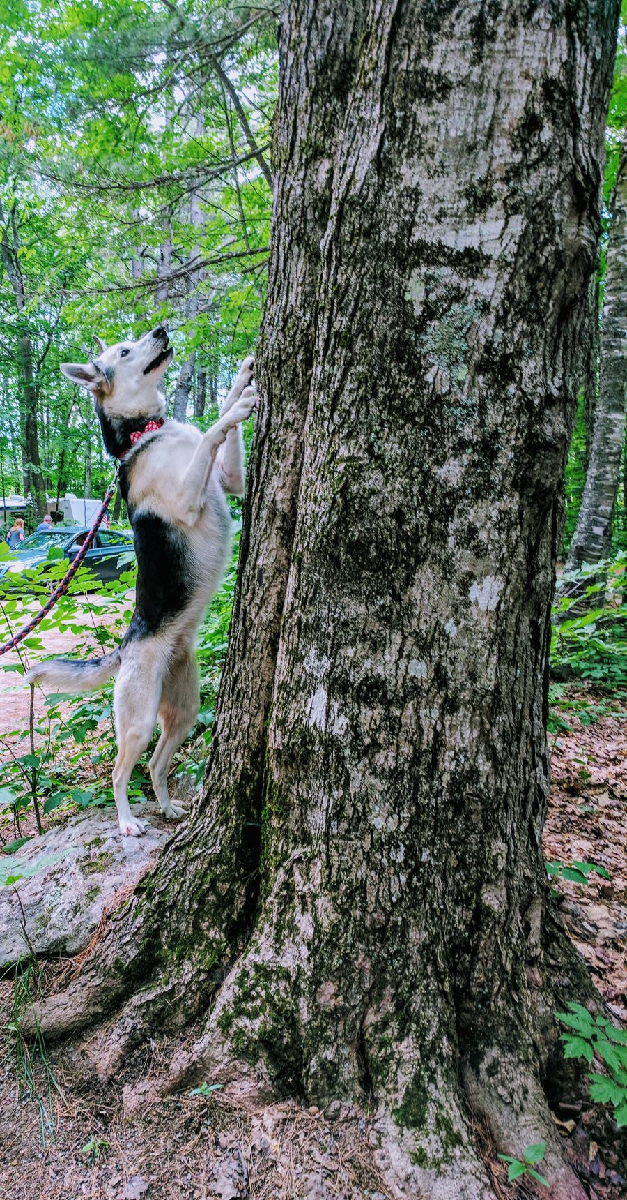 Hello friend Tree Trunk Dog Tree Domestic Animals Pets Animal Themes One Animal Mammal Day Outdoors Dogs Smiling Catching Squirels Breathing Space The Week On EyeEm EyeEmNewHere Pet Portraits Followme