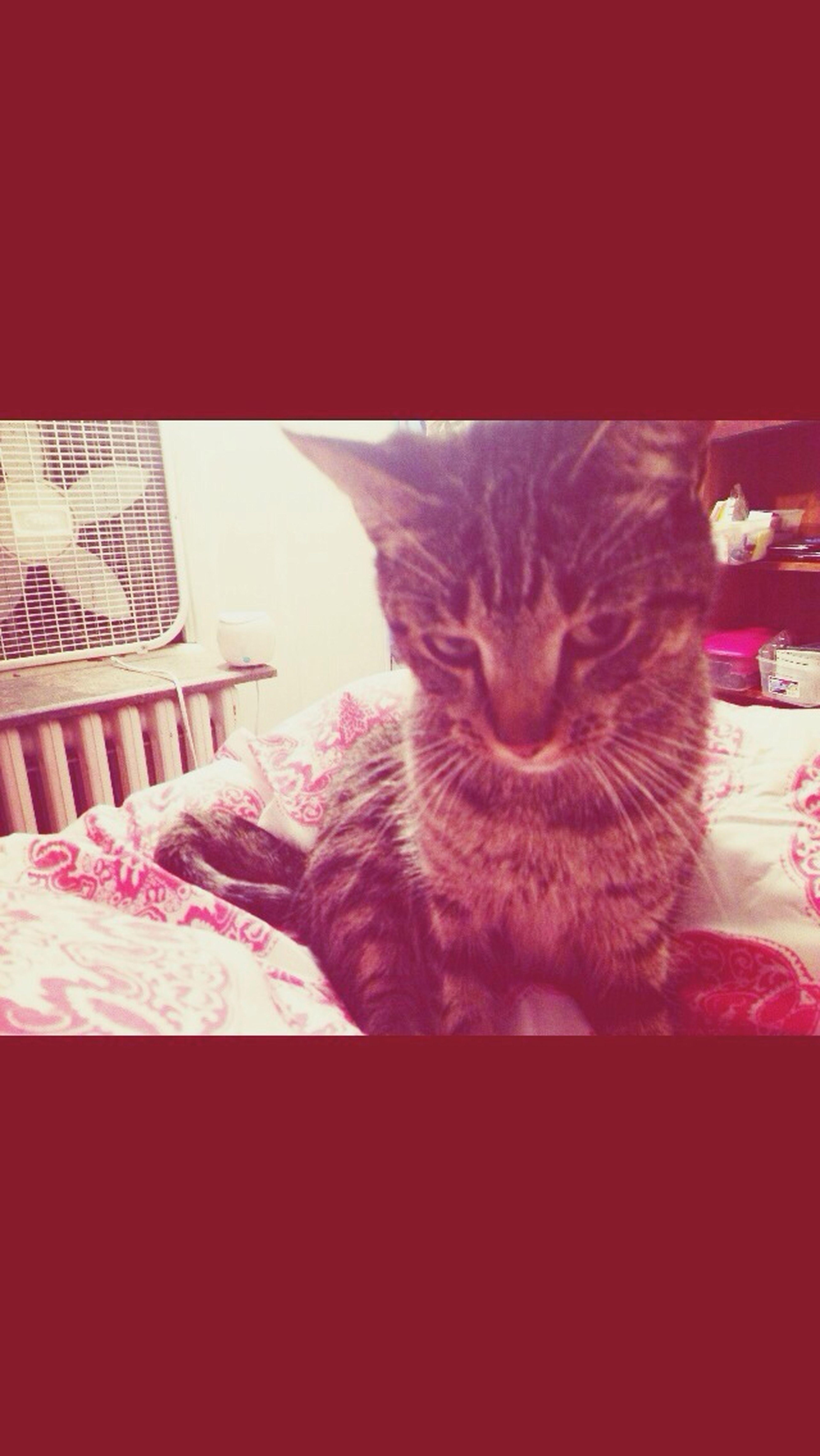 Henry danks Stoner Kitty