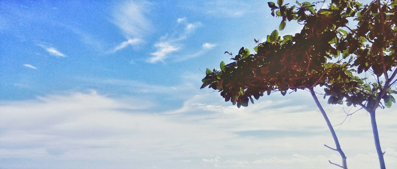 sky, cloud - sky, nature, beauty in nature, tree, low angle view, growth, day, leaf, outdoors, no people, blue, tranquility, scenics, branch, close-up, freshness