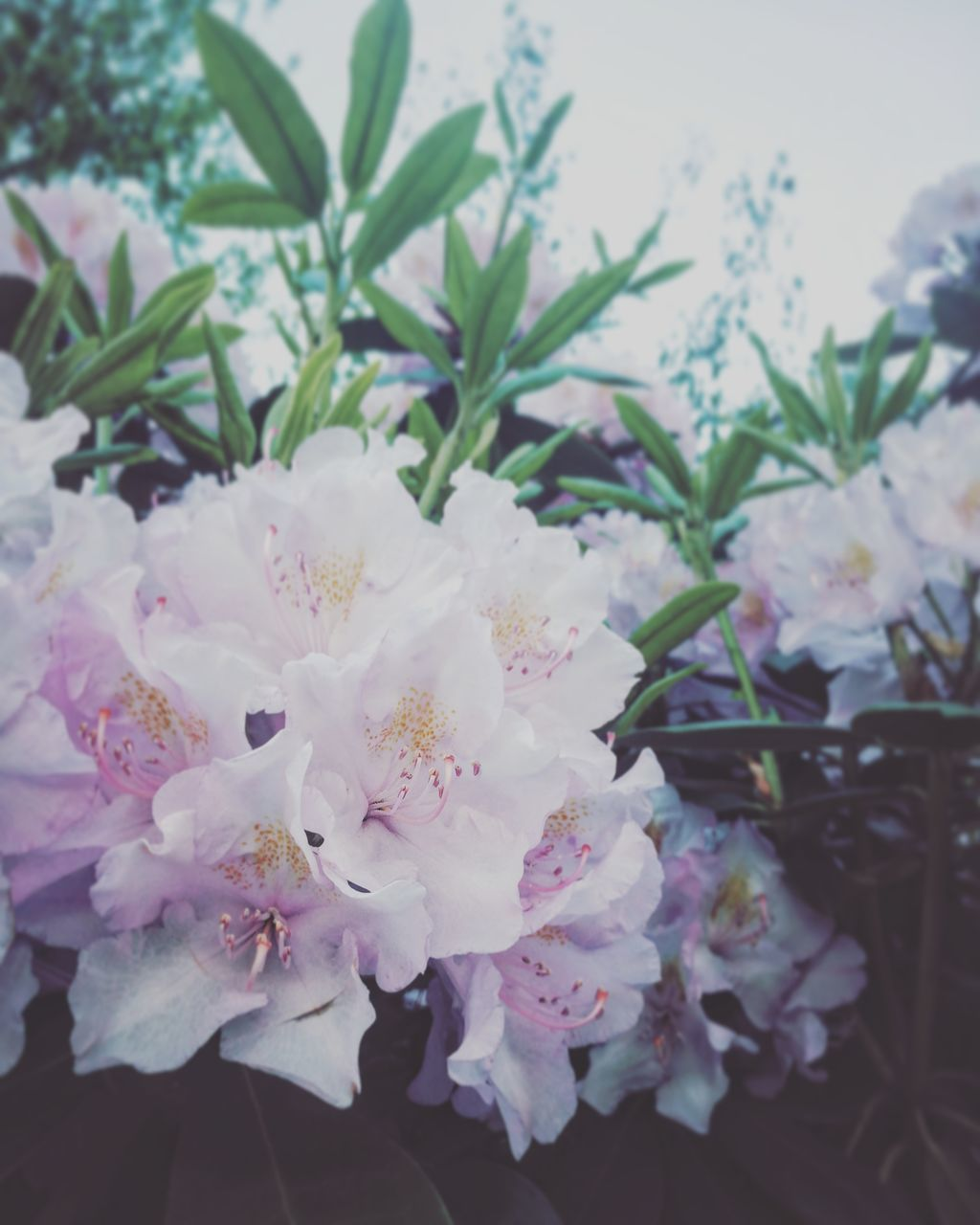 flower, growth, blossom, beauty in nature, no people, nature, fragility, close-up, freshness, outdoors, tree, day