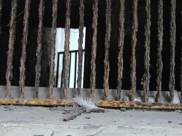 Demirlik Kuştüyü Aniyakala Pas 😕