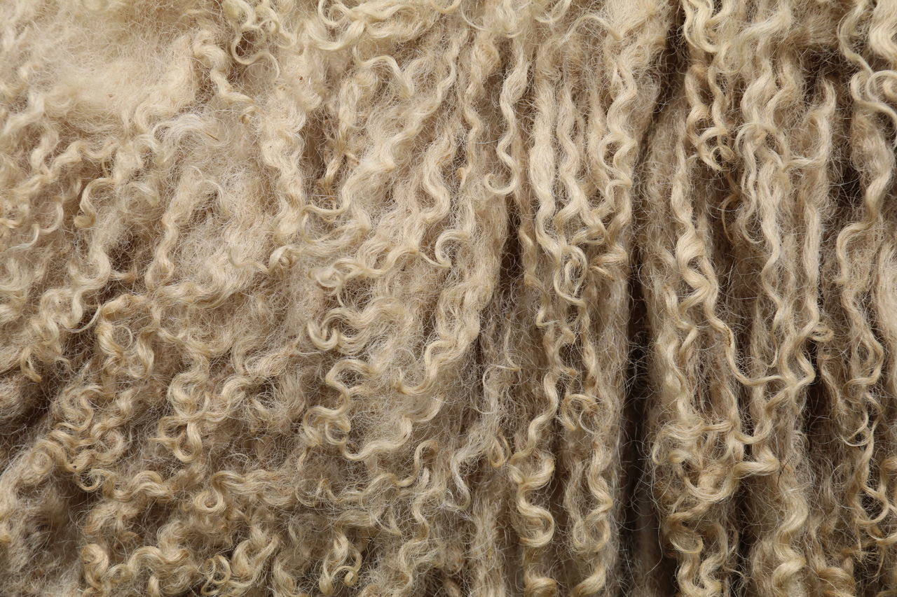 Animal Life Backgrounds Close-up Curls No People Pattern Sheep Texture Warmth Wool