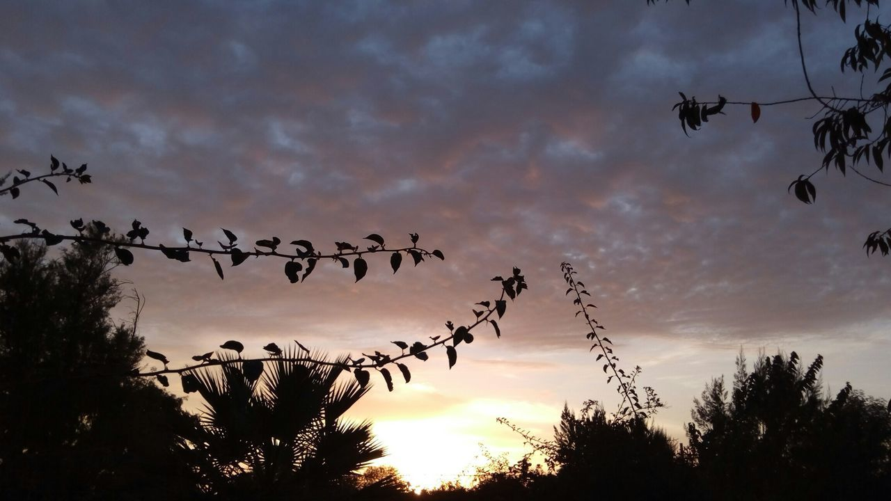 Heaven Meets Earth Place Of Worship Sky And Trees Petals🌸 Cloudscape Sunset Flowers,Plants & Garden Phoneography Beauty Of Decay