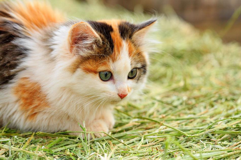 Beautiful stock photos of baby katzen,  Alertness,  Animal Themes,  Cat,  Close-Up