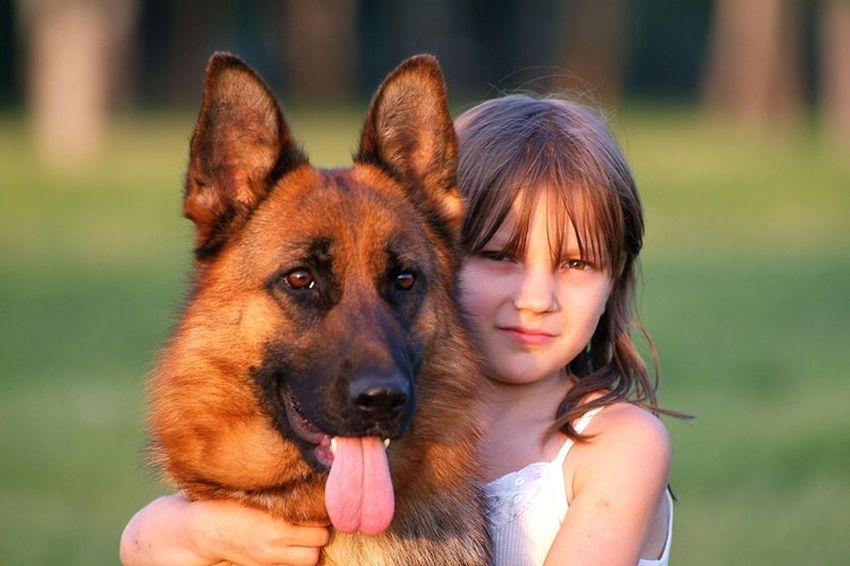 Friendship Dog Pets One Animal Portrait Looking At Camera Close-up Animal Outdoors Happiness Animal Body Part Animal Themes Day Nature Smiling German Shepherd Grass People Cheerful Young Adult
