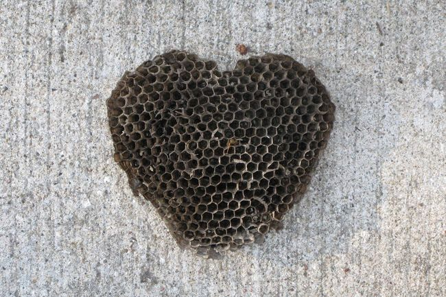 I heart bees. Environment Insect Hive Nature Bees Heart