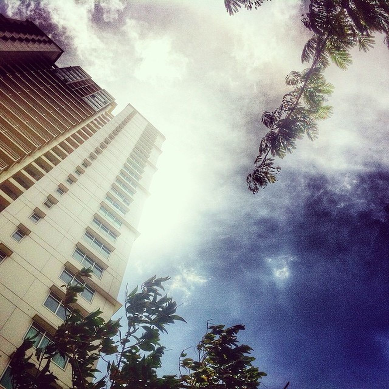 architecture, tree, growth, low angle view, building exterior, sky, built structure, no people, outdoors, city, modern, nature, day