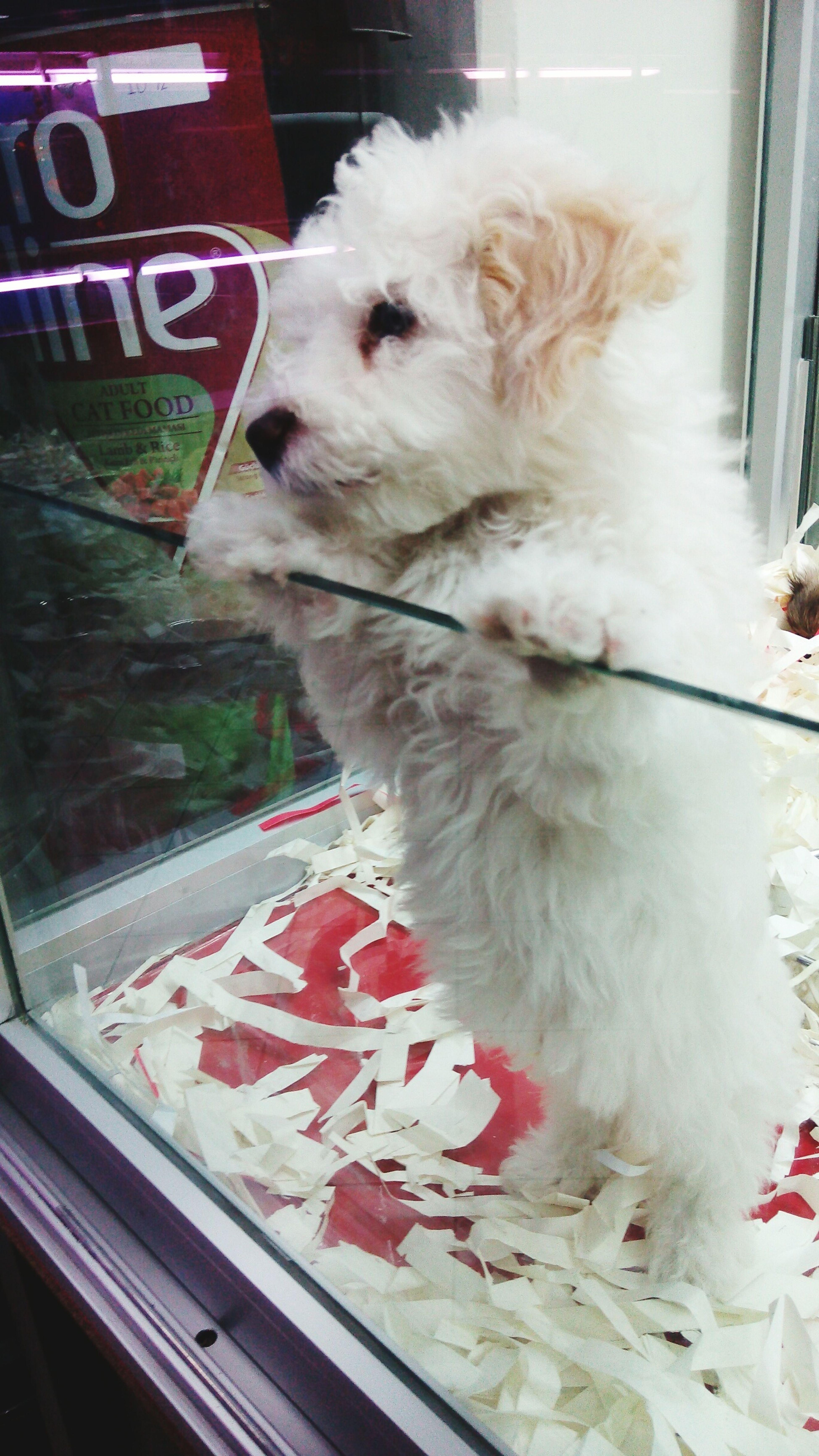 Pets Dog sweet♡ wht.Onr :)
