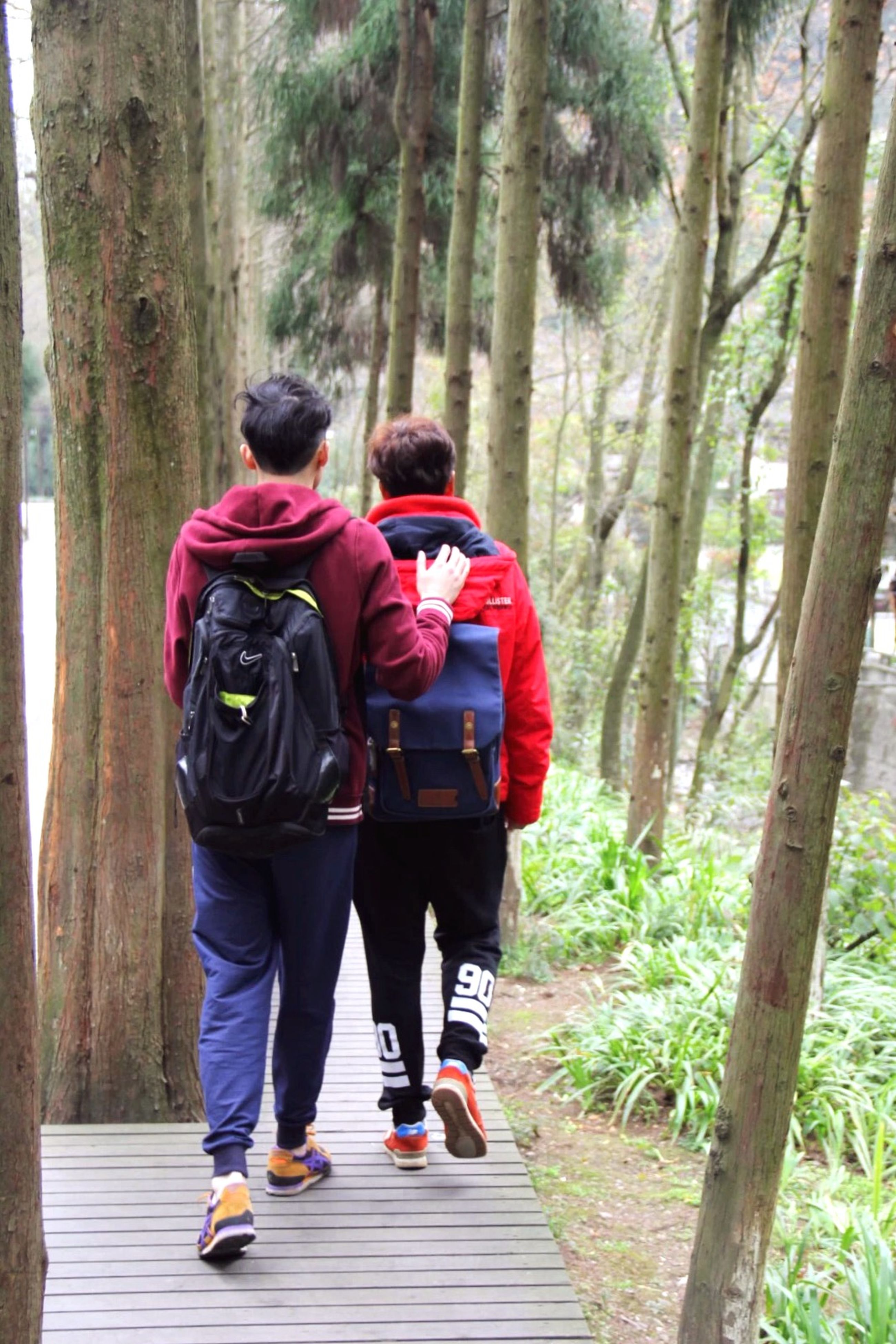 lifestyles, leisure activity, full length, tree, togetherness, casual clothing, rear view, men, bonding, person, love, friendship, forest, walking, backpack, tree trunk