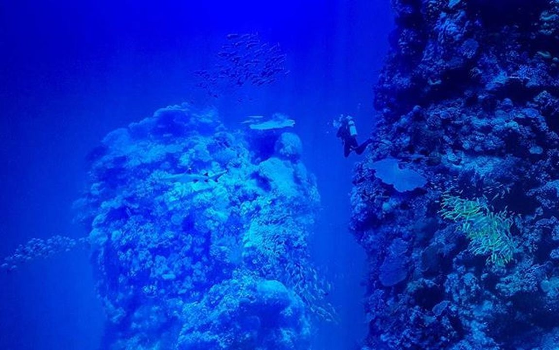 It is a cold week-end, so I decided to go make some diving at the Great Barrier Reef in Australia! 🐟 😁 Greatbarrierreef Diving Gasometer Leipzig Travel Nature Tauchen Australia Ocean Meer Fish Fische Experience Foto Igers Picoftheday Instamood Nofilter