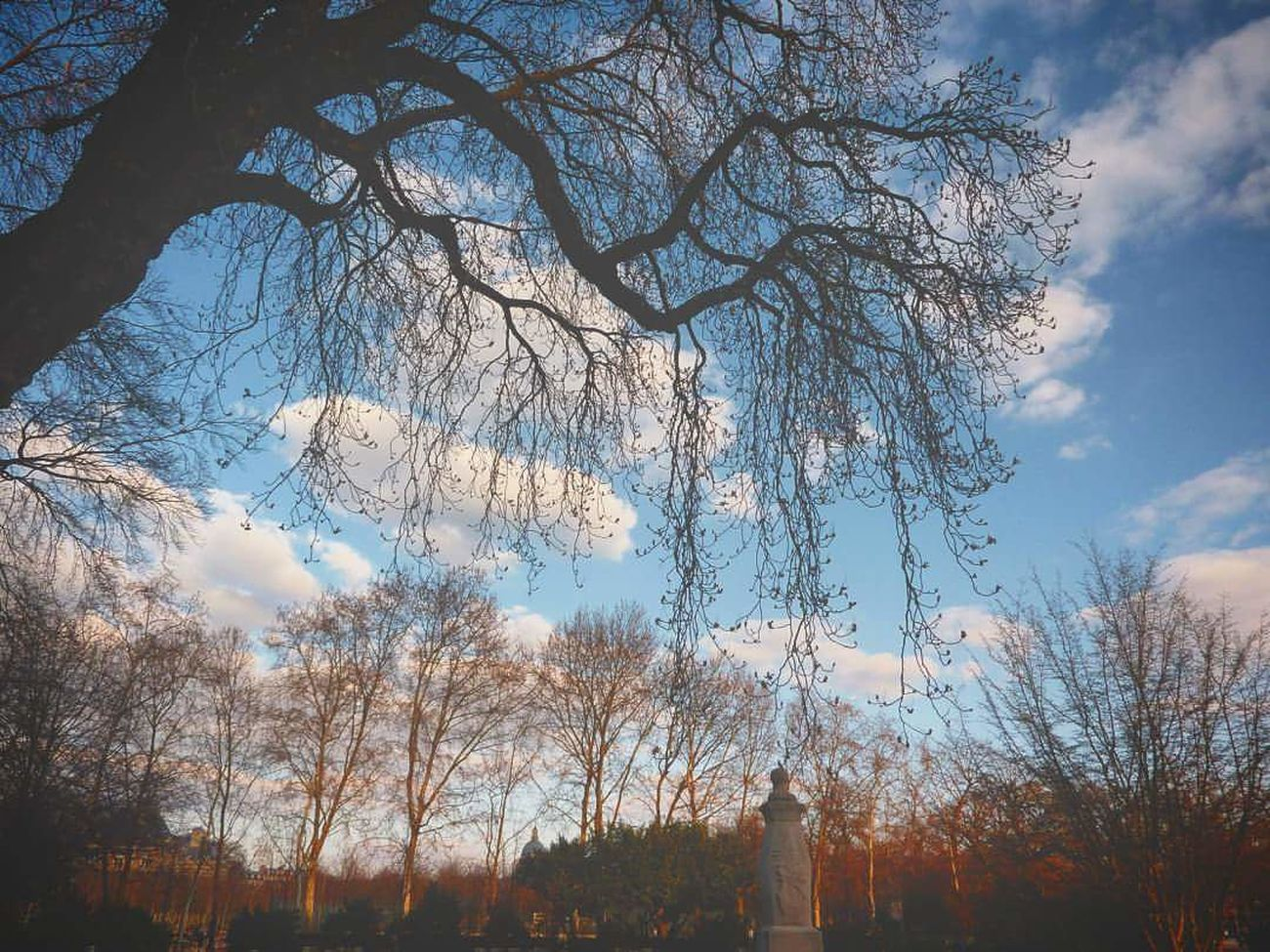 Blue Tree Sky Nature Low Angle View Beauty In Nature No People Sunset Sunlight Tranquility Outdoors Branch Bare Tree Growth Scenics Cloud - Sky Day Park Paris, France  Paris Jardin Du Luxembourg Luxembourg Garden EyeEmNewHere Long Goodbye