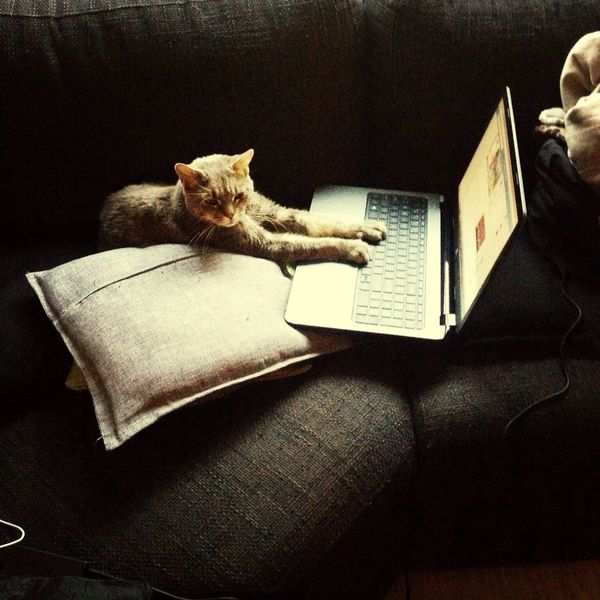 RePicture Learning learning on my laptop at home with my cat? Homework Cat