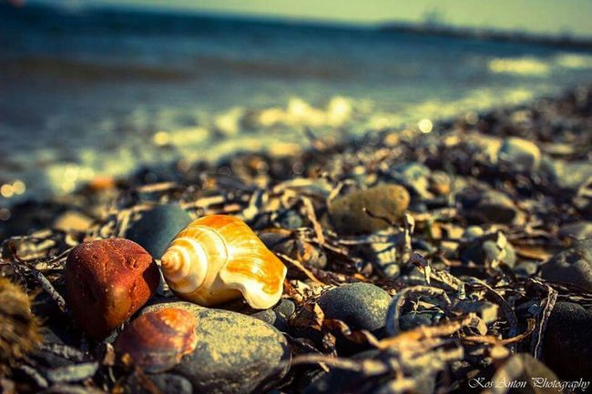 Relaxing Taking Photos Check This Out Enjoying The Sights Sea Seaside Seashells Summer Cyprus