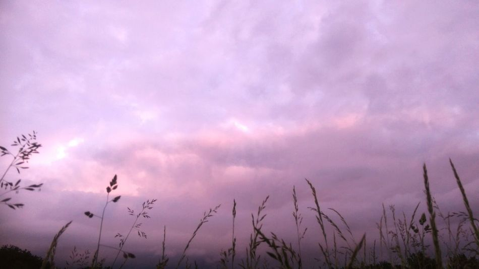 Pastel Power Pastel Colors Pastel Sky Nature_collection Bladesofgrass Backgrounds Nature Photography Lowangleview Lowangleshot