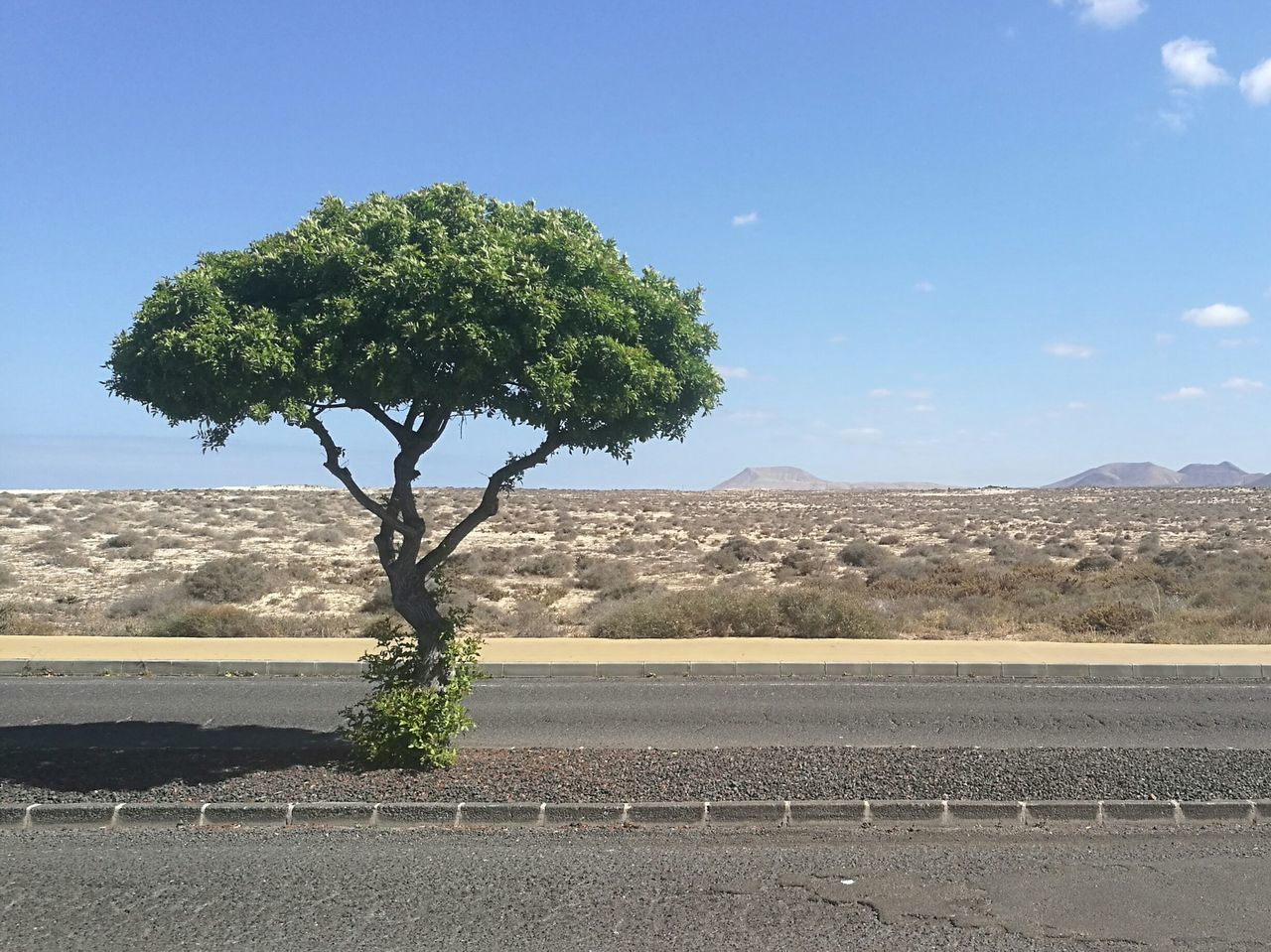 Tree Sky Beauty In Nature Scenics Nature Tranquility Landscape No People Outdoors Mountain Day Contrast Contrasting Landscape Sand Desert Volcanic Landscape Canary Islands Corralejo Beauty In Nature Desert Nature Arid Climate The Great Outdoors - 2017 EyeEm Awards The Street Photographer - 2017 EyeEm Awards