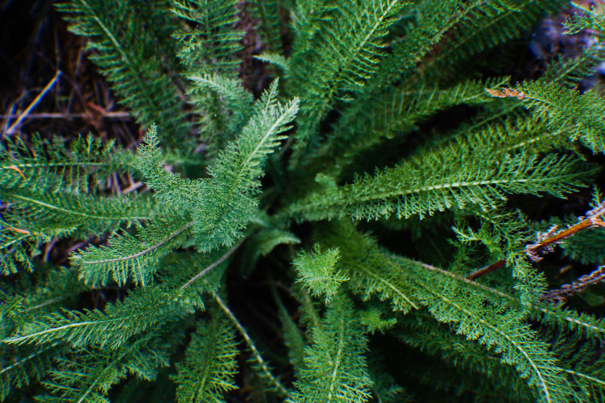 Green Color Growth Close-up Nature Plant Leaf Beauty In Nature Full Frame Freshness Tranquility Scenics Fragility Outdoors Focus On Foreground Day Extreme Close-up Botany Lush Foliage Pine Tree Plant Life Bigfork Mt