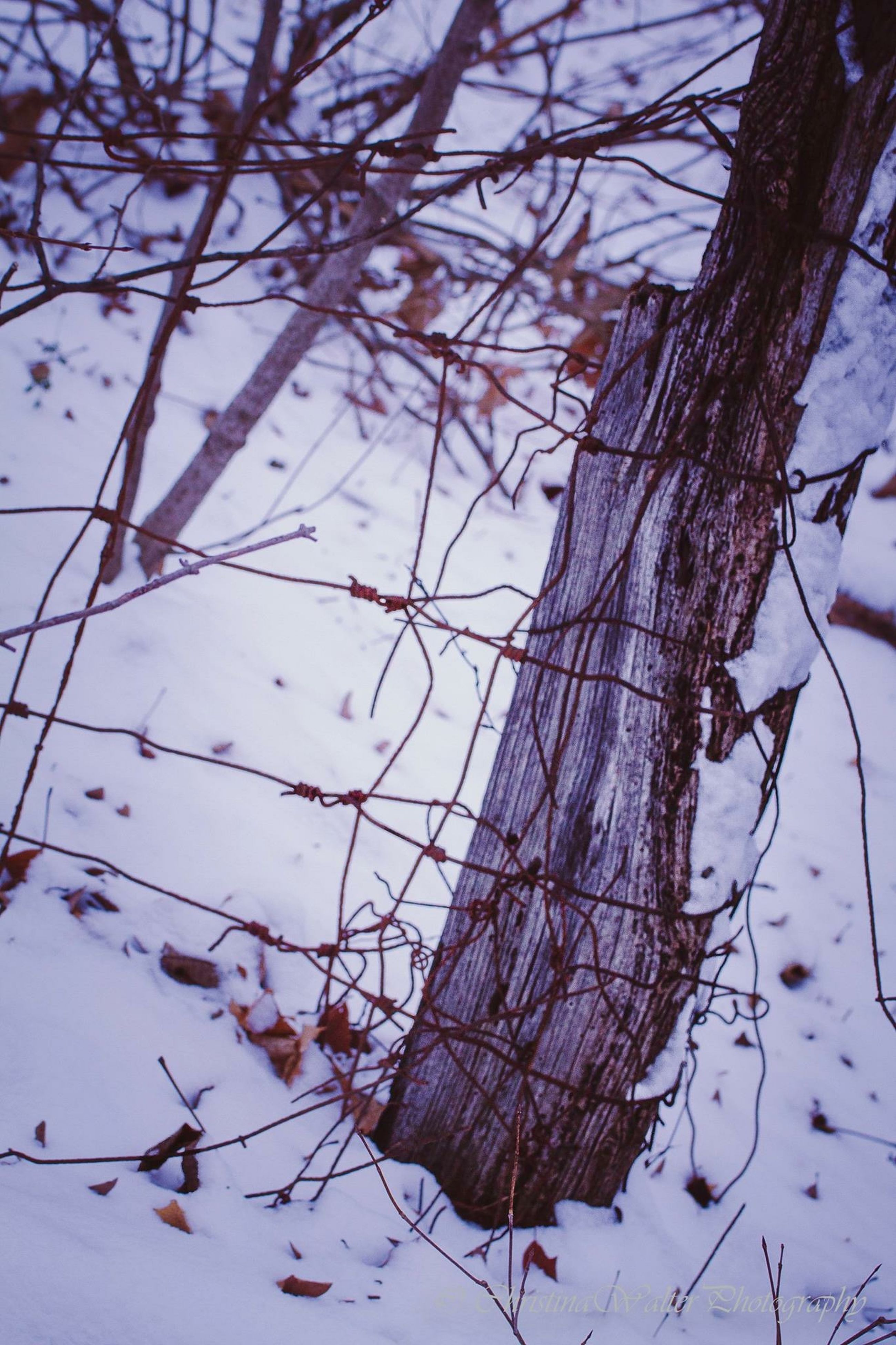 branch, winter, cold temperature, bare tree, season, snow, nature, frozen, sky, close-up, low angle view, weather, tree, focus on foreground, day, dry, twig, outdoors, growth, tranquility
