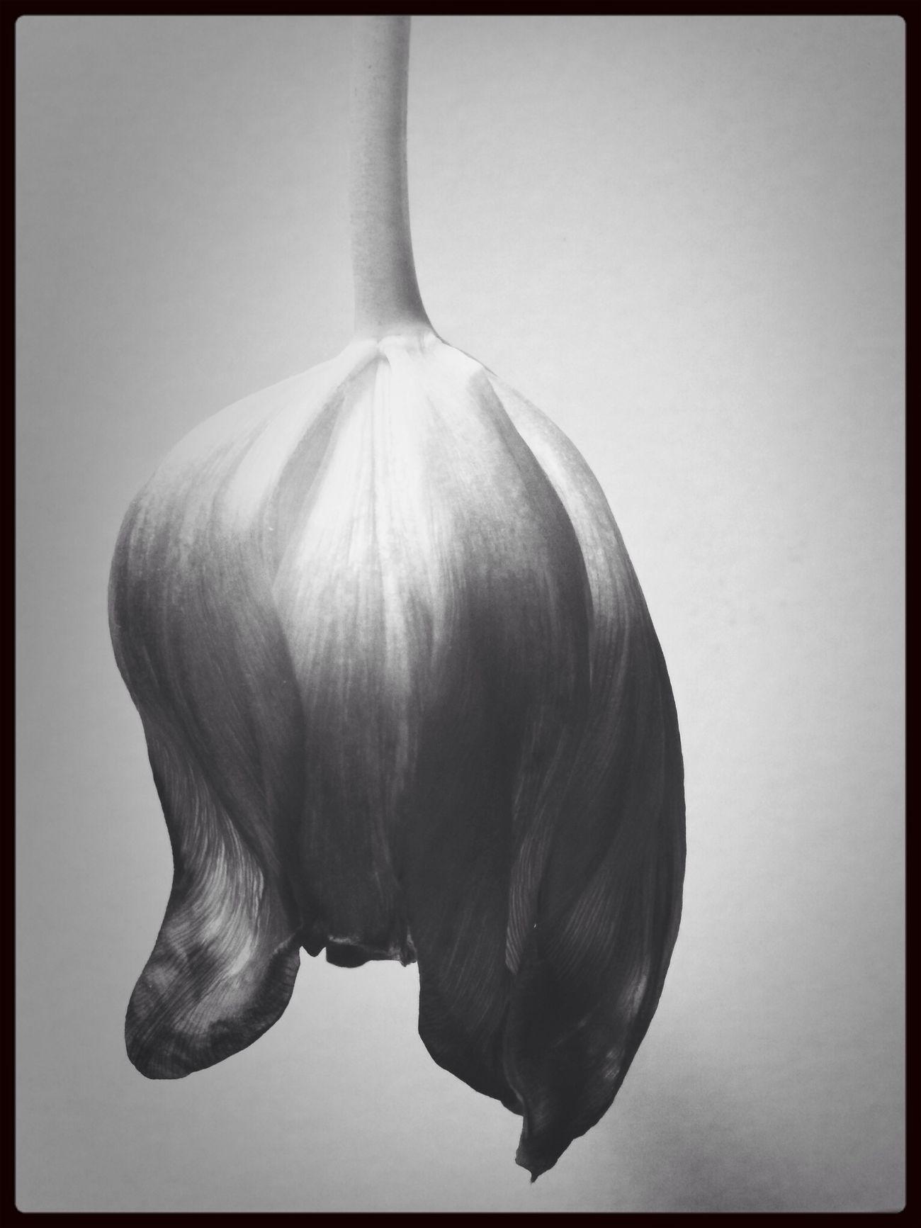 Flower Porn Flower Black & White Blackandwhite