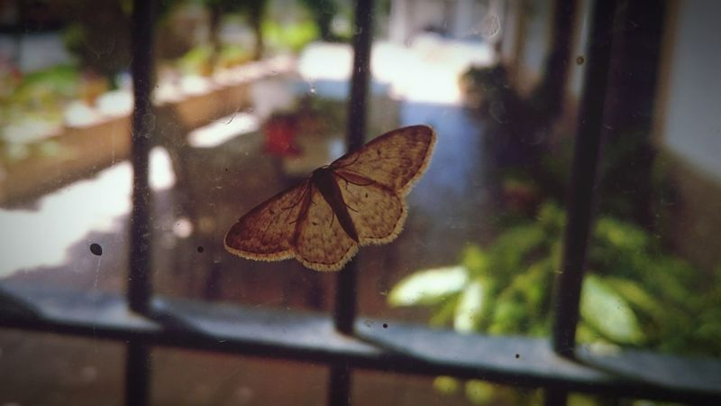 Butterfly EyeEm Insect Taking Photos Hello World Popular Photos Beauty Photo Nature