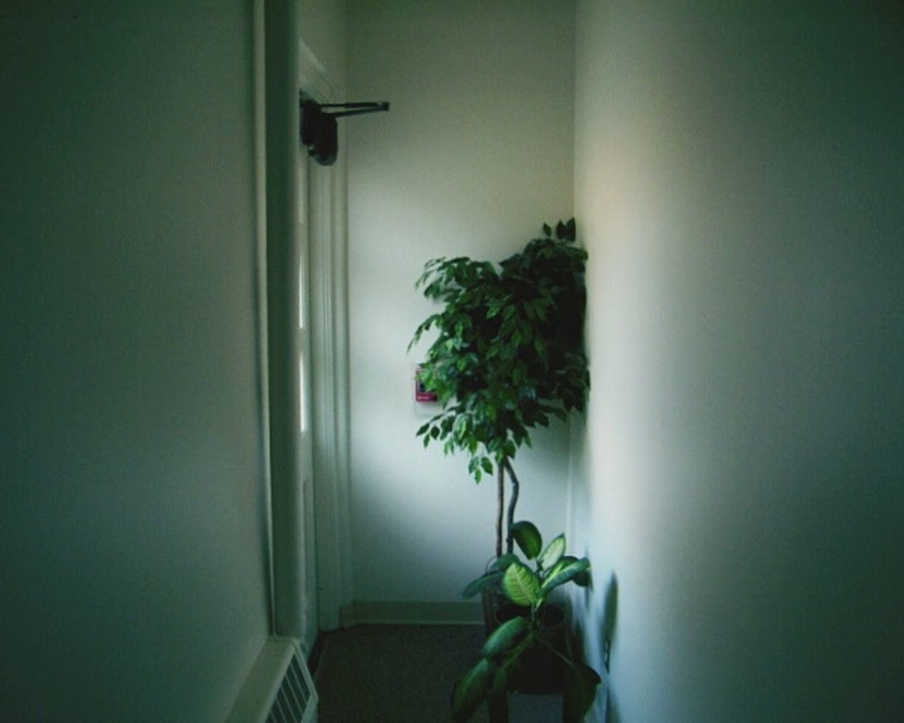 Corridor Hallway Narrow Narrowpath Plants Plant Light Light Beams Rays Of Light Light Rays