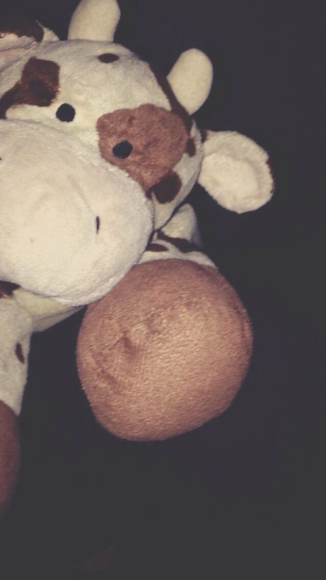 My Plush Cow Canelle🐄 Since I Six Years Inseparable