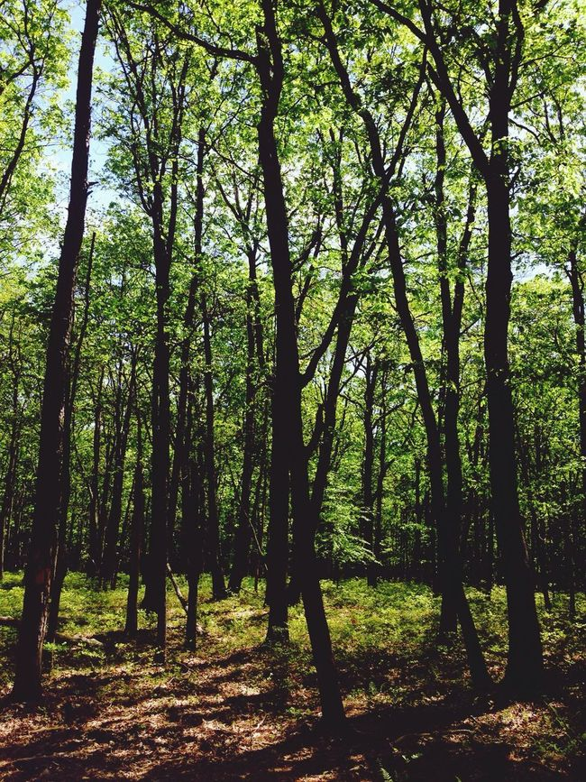 Connected With Nature The beautiful forest forest in the Poconos?