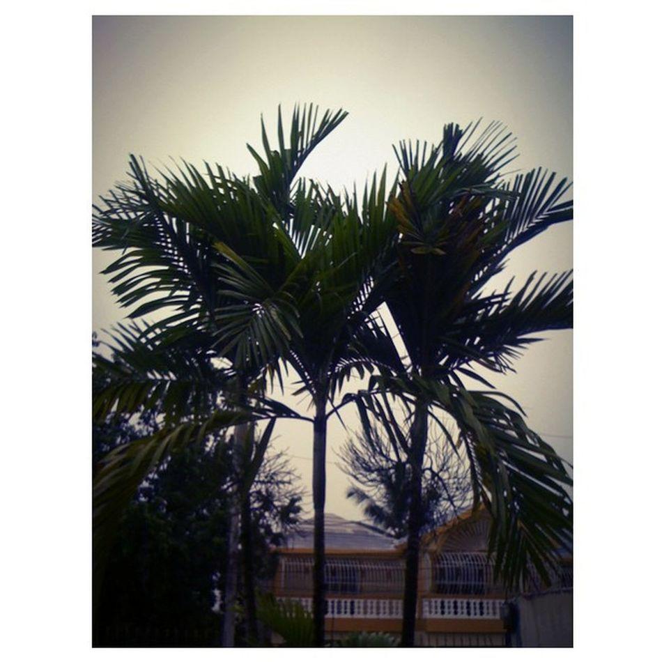 Palmas dia nublao en Santo Domingo Iphonegraph