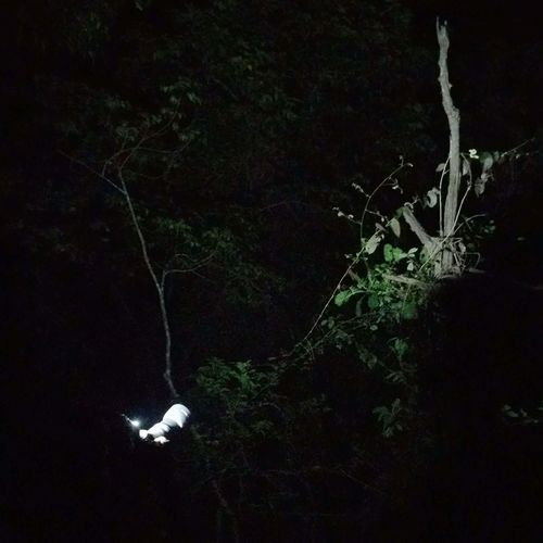 Mobile photography Nightphotography Forest Outdoors nature Friend@try to capture green pit viper 1200D