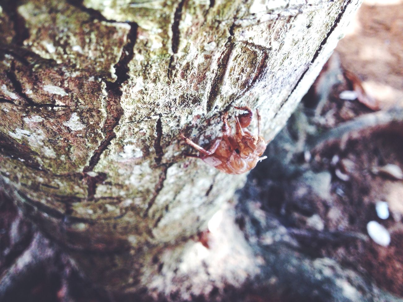 Nature Me Enquanto cigarras cantam cigarros queimas seus pulmões 🌬 EyeEm Nature Lover EyeEm Gallery First Eyeem Photo Popular Photos Save The Nature Love ♥ Talking Pictures Just Ride Vscocam Live To Learn Photography Colors IPhone Art IPhone Photography Colorful