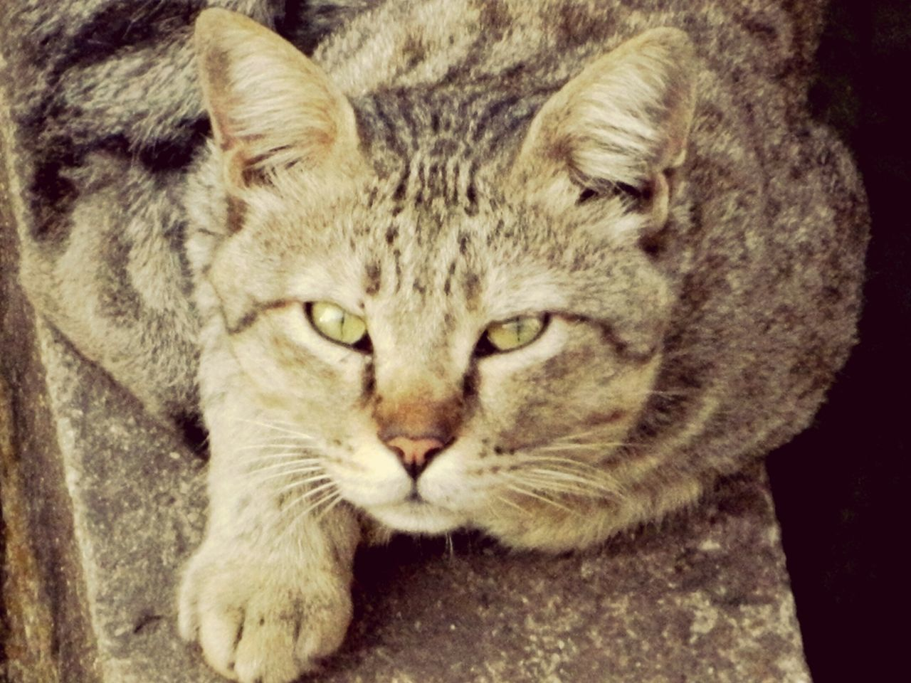 Pets Cat♡ Angry Cat Rageface First Eyeem Photo Cats Of EyeEm Amchi Mumbai Bombay Mumbaimerijaan Mumbaifromabove