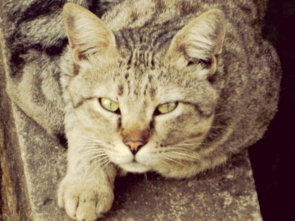 Pets Cat♡ Angry Cat Rageface First Eyeem Photo Cats Of EyeEm Amchi Mumbai Bombay Mumbaimerijaan Mumbaifromabove