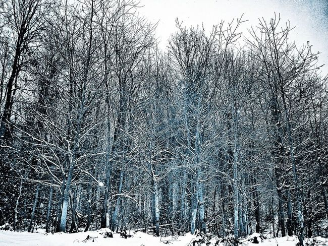 Snow Trees Landscape_Collection Landscape_photography Forest Winter