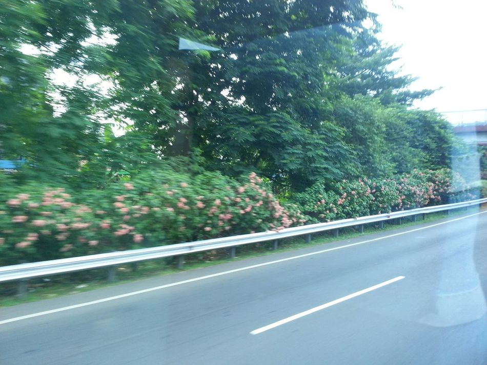 INDONESIA Taken Through A Moving Bus Window Bushes Pink Flower Trees Reflections