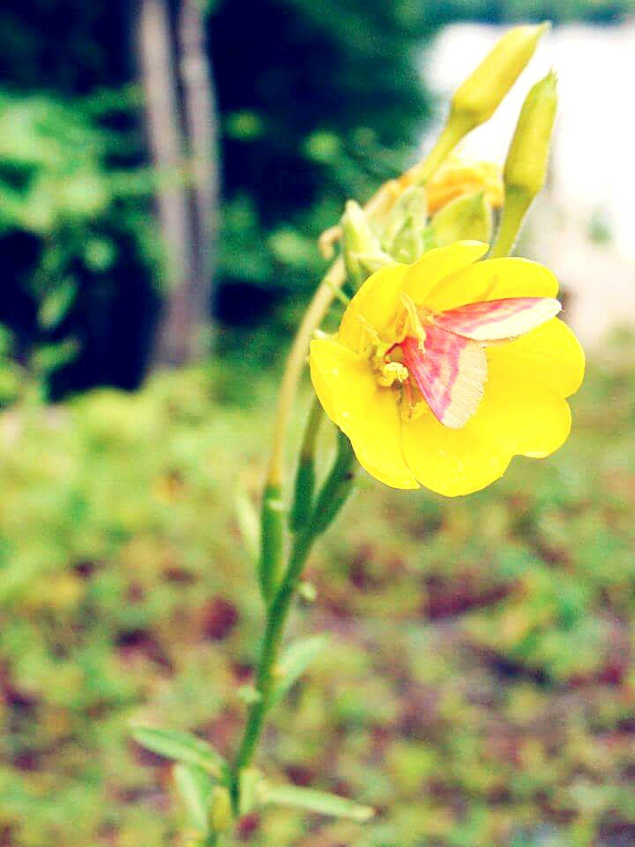 Fleur ♡ Flowers,Plants & Garden