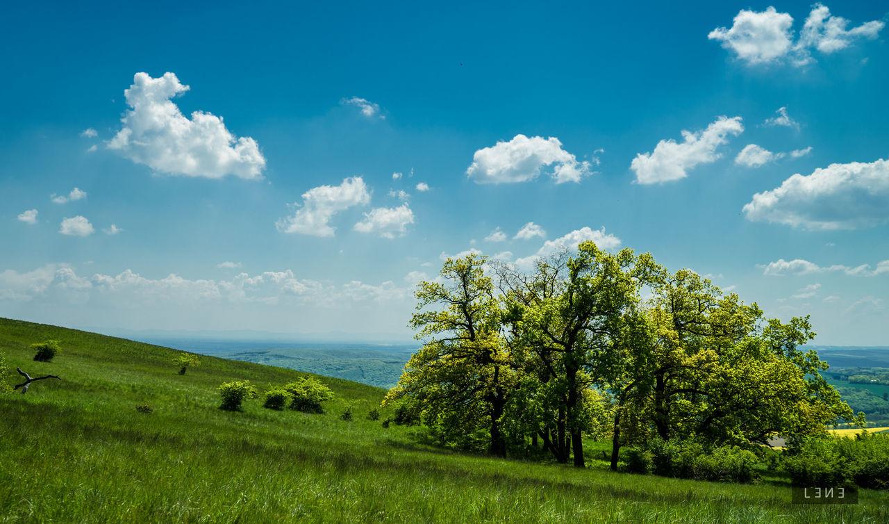 #Bohemian #czechrepublic #vineyard #wine Beauty In Nature Cloud - Sky Day Grass Landscape Nature Outdoors Sky