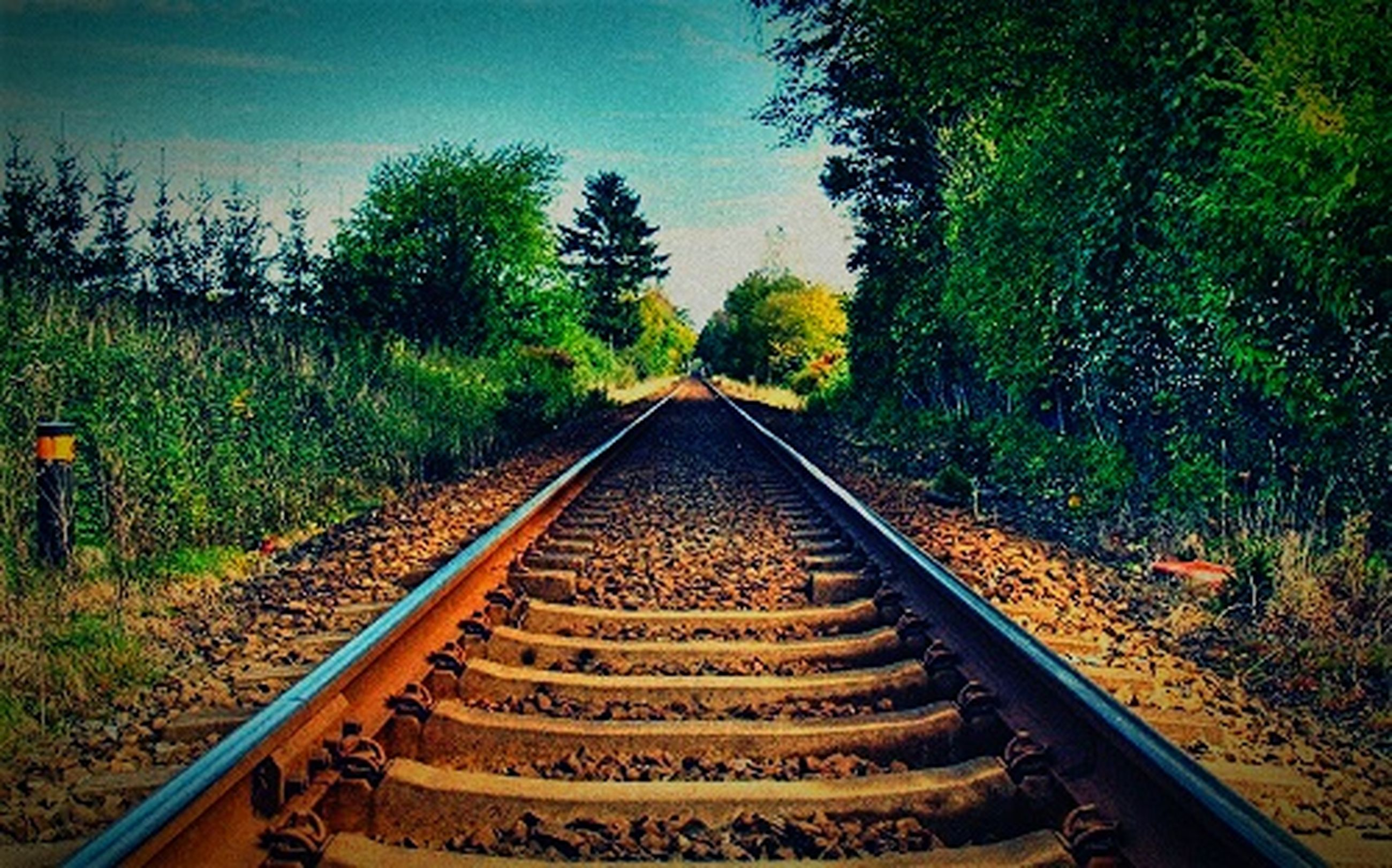 the way forward, railroad track, diminishing perspective, tree, transportation, vanishing point, rail transportation, tranquility, tranquil scene, straight, growth, nature, sky, landscape, forest, no people, day, long, outdoors, field